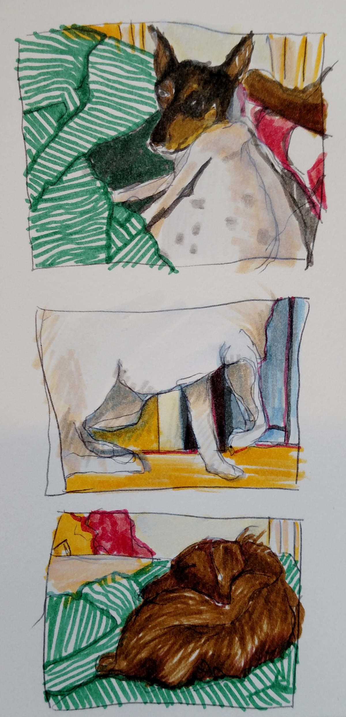 3 drawings of rescue dogs, including toy fox terrier, American eskimo and dachshund mixes
