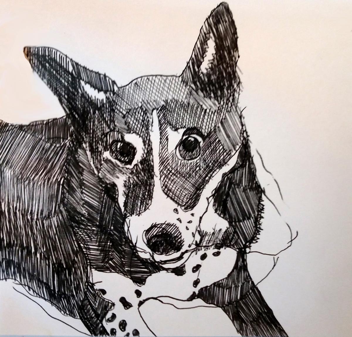 illustration of a mixed breed rescue dog