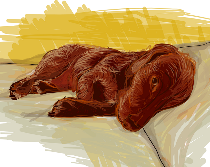illustration of a brown wire haired dachshund