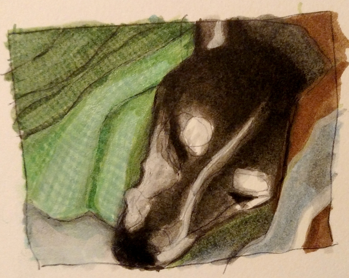 illustration of a mixed breed rescue dog under a green blanket